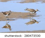 Two Common Sandpipers On Goa...