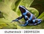 blue poison dart frog ... | Shutterstock . vector #280493234
