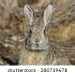 Small photo of wild bunny face