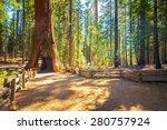 Tunnel Tree  Mariposa Grove ...