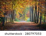 autumn forest. nachtegalenpark... | Shutterstock . vector #280797053