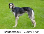 the portrait of saluki dog in... | Shutterstock . vector #280917734