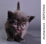 Stock photo small black kitten withs meowing isolated on dark background studio shot 280924466