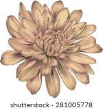 beautiful orange chrysanthemum... | Shutterstock .eps vector #281005778