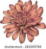 beautiful orange chrysanthemum... | Shutterstock .eps vector #281005784