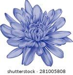 beautiful blue chrysanthemum... | Shutterstock .eps vector #281005808
