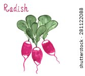 radish salad with leaf isolated ... | Shutterstock .eps vector #281122088