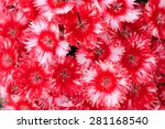 Red Flowers Background  Floral...