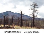 remains of burned trees from... | Shutterstock . vector #281291033