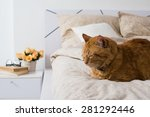 Stock photo bright white bedroom interior cat sitting on a bed with beige linen flowers on a bedside table 281292446