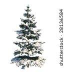 Nice Tree Fir On White...