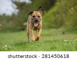 border terrier  | Shutterstock . vector #281450618