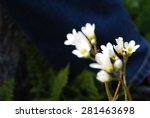 Small photo of Against all odds, white flowers
