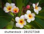 frangipani | Shutterstock . vector #281527268