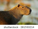 the biggest mouse around the... | Shutterstock . vector #281533214