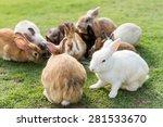 group of cute rabbits in garden | Shutterstock . vector #281533670