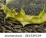 Close   Up Of Sunflower With...