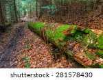 Pine Log In A Forest