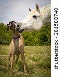 Great Dane And Arabian Horse...
