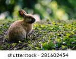 Rabbit  Bunny In The Woods