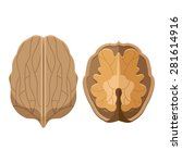 walnut illustration. | Shutterstock .eps vector #281614916