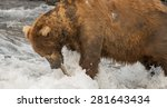 brown bear pulling salmon out... | Shutterstock . vector #281643434