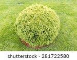 Spherical Green Bush In A...