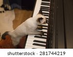 Stock photo cute adorable pussycat is playing the keyboard 281744219