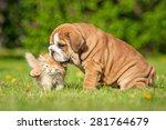 Stock photo english bulldog puppy playing with a little kitten 281764679