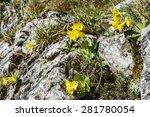 Natural Habitat Of Plants...