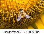 A Bee Hovering While Collecting ...