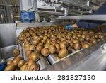 kiwi on packing line running on ... | Shutterstock . vector #281827130