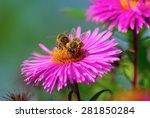 Bees On A Pink Michaelmas Dais...