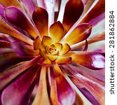 succulent plant background.... | Shutterstock . vector #281862884