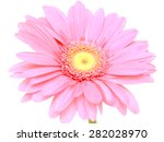 pink gerbera flower isolated on ... | Shutterstock . vector #282028970