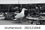 Seagull In The Port   B W Photo