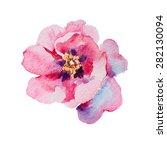Pink Peony Watercolor