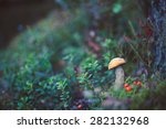 Closeup Picture Of Leccinum...