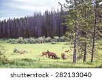 Wild Deers In The Meadow Near...