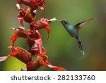 hummingbird green hermit ... | Shutterstock . vector #282133760