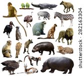 set of hippo and other african... | Shutterstock . vector #282163304