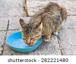 Wild Cat Drink Water In Nature...