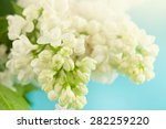 close up beautiful lilac... | Shutterstock . vector #282259220