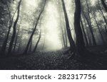 Dreamy Mood Forest