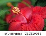 hibiscus in red | Shutterstock . vector #282319058