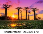 beautiful baobab trees at... | Shutterstock . vector #282321170