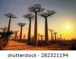 beautiful baobab trees at... | Shutterstock . vector #282321194