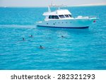 Group of dolphins accompanied the boat