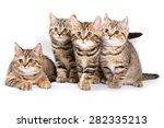 Stock photo four striped kitten isolated on white 282335213