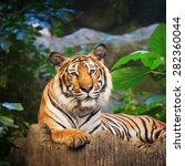 bengal tiger in forest show... | Shutterstock . vector #282360044